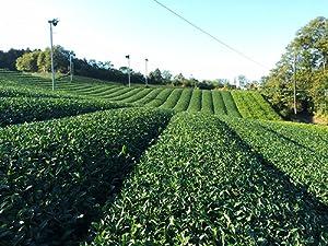 Amazon.com : Matcha Green Tea Powder - Superior Culinary
