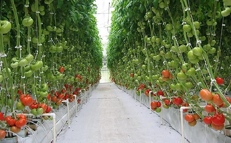 Simply Attach Tomato Twine To Greenhouse Frame, Clamp Twine Between Clip  Hinges, Then Close The Clip Around Tomato Plant ...