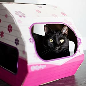 Amazon.com : Coolest Cat Playhouse for Cats by Kitty