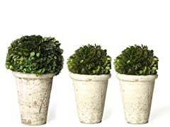 Boxwood Half Ball Set of 3