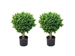 "Set of 2 24"" Hedyotis Topiary Trees"