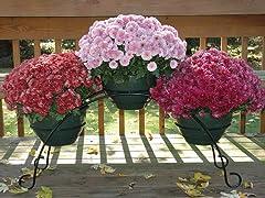 3 Flower Pot Bridge, Black