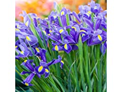 Mixed Iris Flower Bulbs (90-Pack)