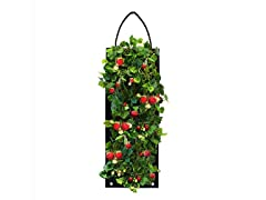 Organic Strawberry Hanging Seed Bag Kit