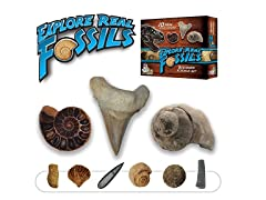 REAL Fossil Starter Science Kit