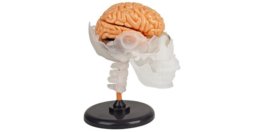 Squishy Brains Toys : SmartLab Toys Amazing Squishy Brain