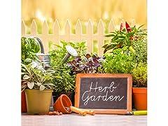 Starter Garden Seeds