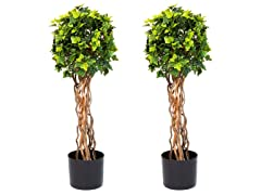 "Set of 2 30"" English Ivy Topiary Trees"