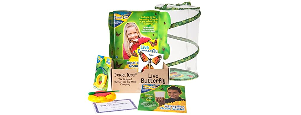 Insect Lore Butterfly Garden Gift Set $14.99 @ Kids.woot.com ...
