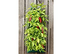 Hanging Jalapeno Pepper Organic Kit