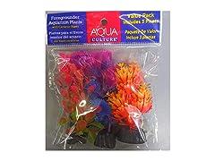 Aquaculture  Aquarium Plants