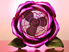 Cool Winds Purple Rose