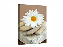 Daisy and Stones - Wrapped Canvas (3 Sizes)