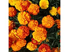 Merry Marigolds Seed Mat Kit