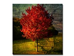 Sainte-Laudy Autumn Red