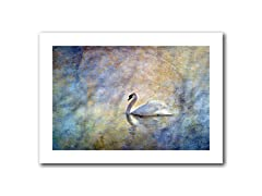 The Swan 12x18 Rolled Canvas