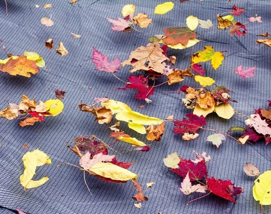 how to keep leaves out of above ground pool