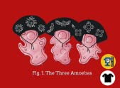 The Three Amoebas