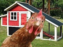 Merry Pet Habitat Chicken Coop