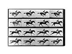 Horse in Motion II (Multiple Sizes)