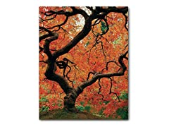David Farley Japanese Tree I (2 Sizes)