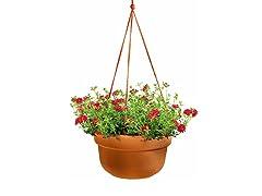 6PK Hanging Basket, 12-Inch, Terra Cotta