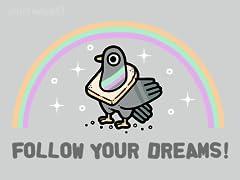 Pigeon Dreams
