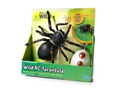 R/C Tarantula
