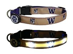 University of Washington LED Collar - M