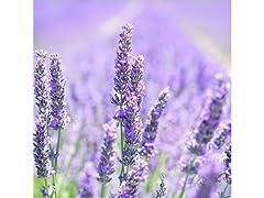 Lavender Flower Seed Mat Kit