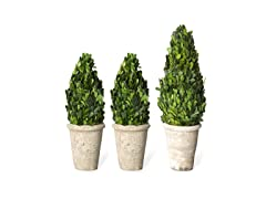 Boxwood Cone Set of 3