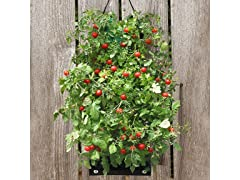 Organic Hanging Cherry Tomato Bag