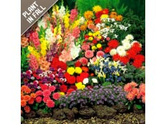 Rock Garden Collection (55-Bulbs)
