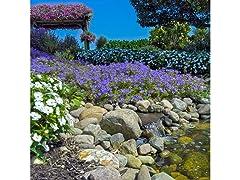 Rock Garden Collection (55-Bulbs)