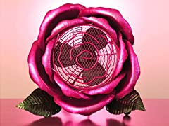 Cool Winds Pink Rose