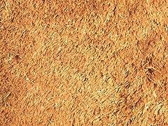Gold Silky Shag Plain (2 Sizes)