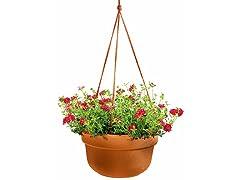 Hanging Basket, 10-Inch, Terra Cotta