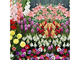 Bees & Butterfly Collection (100 Bulbs)