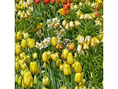 45 Days Of Spring Blooms (45-Bulbs)
