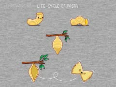 Life Cycle of Pasta