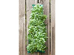 Organic Hanging Basil Bag