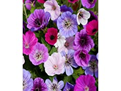 Touch Of ECO Geranium Fantasy Mixed Flowers