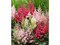 Touch Of ECO Astilbe Plume Mix