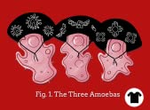 The Three Amoebas