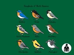 Songbirds of North America Jersey Zip Hoodie