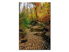Autumn Stream by Kurt Shaffer