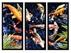 George Zucconi Koi (2-Sizes)
