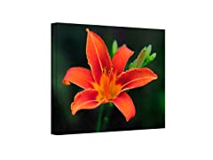 Petals in Focus Wrapped Canvas(3 Sizes)