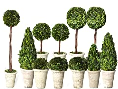 Boxwood Decor Set of 11 Trees