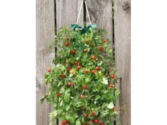 Hanging Cherry Tomato Bag